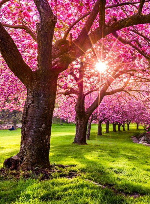 Spring/Air